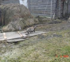 Инженеры предприятия на обмере Тверская область Калининский район Полупустошь клиенты организации довольны