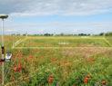 Вынос земельного участка «в натуру»